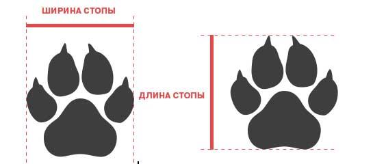 размер стоп у собаки